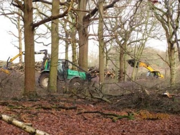 Writtle Park Coppicing Copyright: Graham Smith