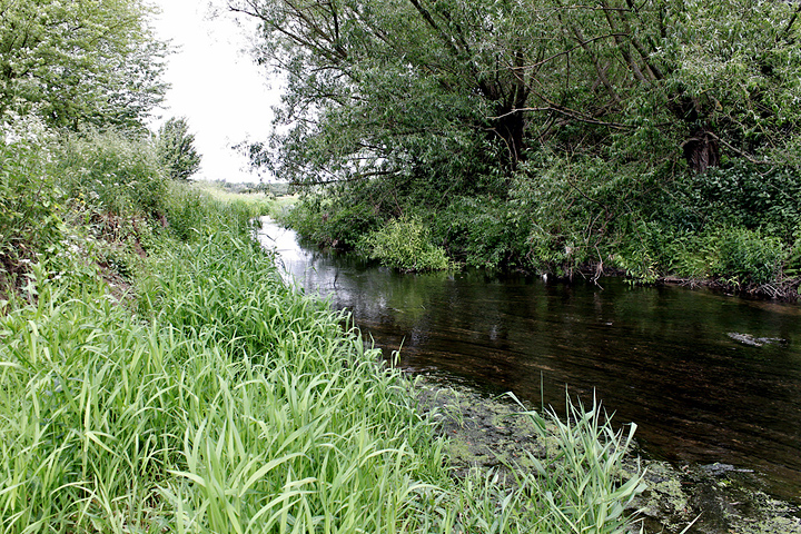 The River Roding - (20 May 2011) Copyright: Leslie Butler