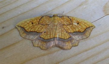 Bordered Beauty. Copyright: Stephen Rolls