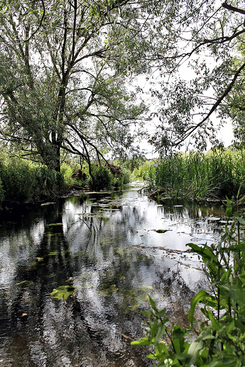 The River Roding - 3 (20 May 2011) Copyright: Leslie Butler
