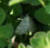 Grass Rivulet Copyright: Robert Smith