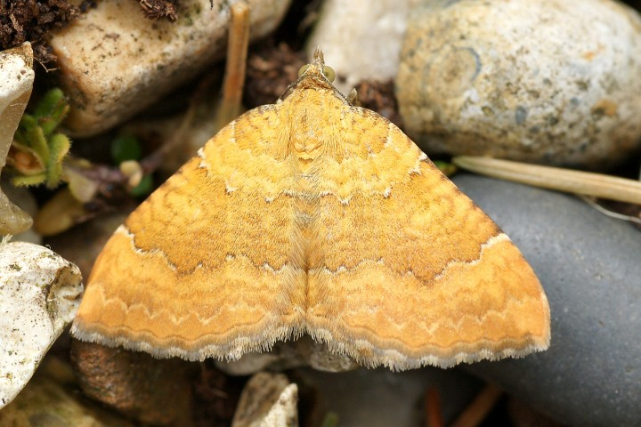 Yellow Shell Leigh Copyright: David Lee