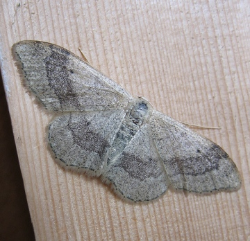 Riband Wave. Copyright: Stephen Rolls