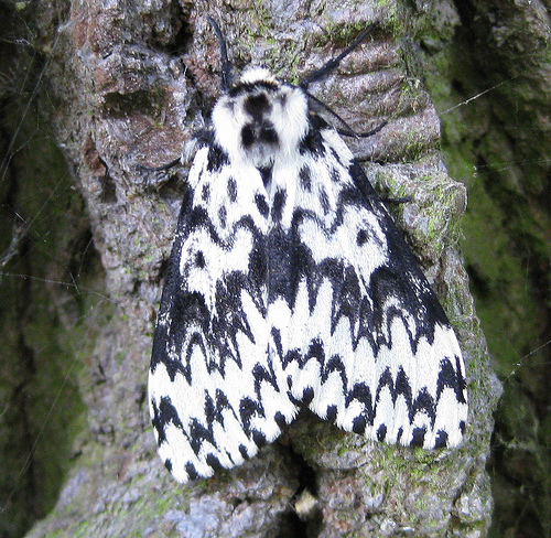 Black Arches 2 Copyright: Stephen Rolls