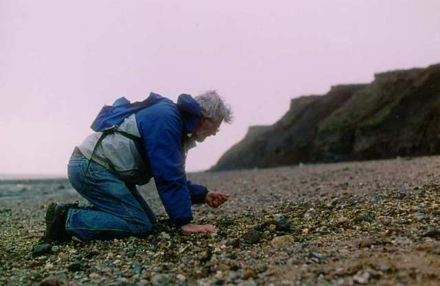 Collecting fossils on the beach at The Naze Copyright: unknown