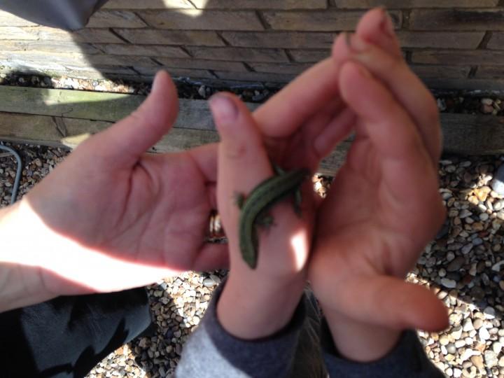 Green Lizard Copyright: Vivianne Tierney