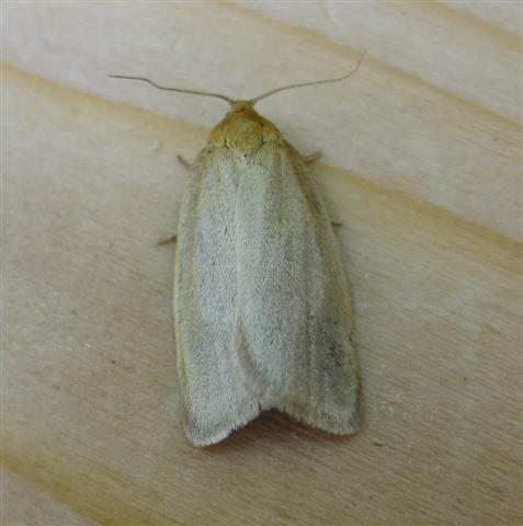 Timothy Tortrix. Copyright: Stephen Rolls