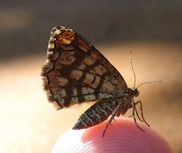 Latticed Heath 2 Copyright: Stephen Rolls