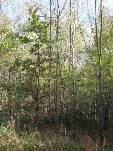 plantation 4 Copyright: Peter Pearson