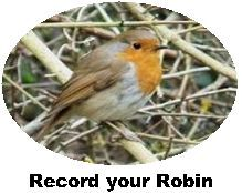 Record your Robin