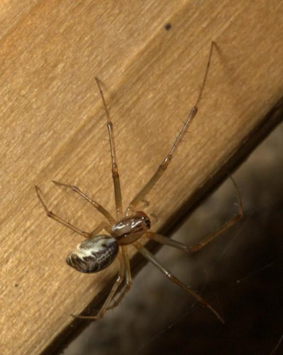 Vange spider Copyright: Colin Brodie