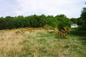 Mill Green Common heather grassland Copyright: Graham Smith