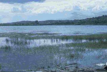 estuarine marshes