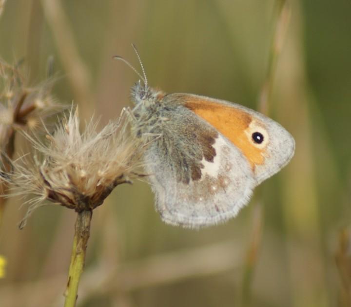 Small Heath Copyright: Robert Smith