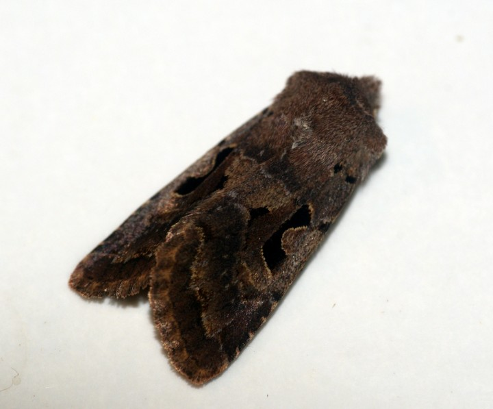 Hebrew Character 3 Copyright: Ben Sale