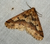 Mottled Umber 3 Copyright: Ben Sale