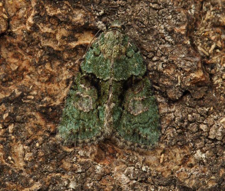 Tree-lichen Beauty 5 Copyright: Graham Ekins