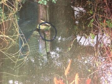 Water vole sitting on platform Copyright: Clare Brush