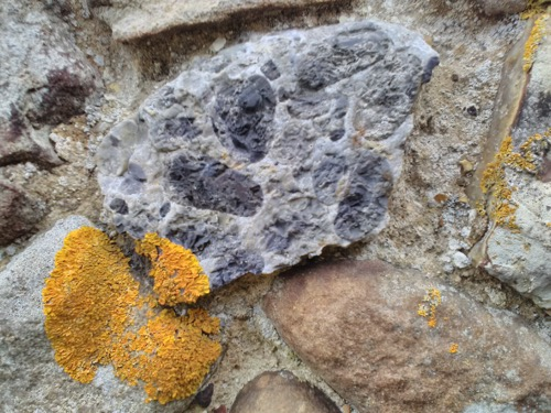 Part of a Hertfordshire puddingstone quern stone Copyright: Mike Howgate