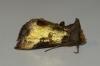 Burnished Brass aberration Copyright: Ben Sale