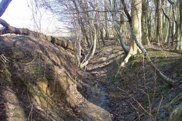 Stoneymore Wood Bank 2 Copyright: Graham Smith