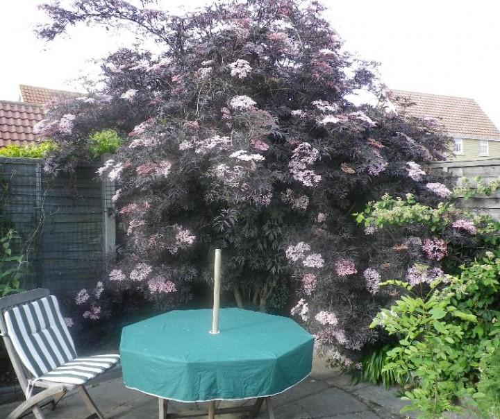 A Hadleigh garden plant Copyright: Michael Daniels