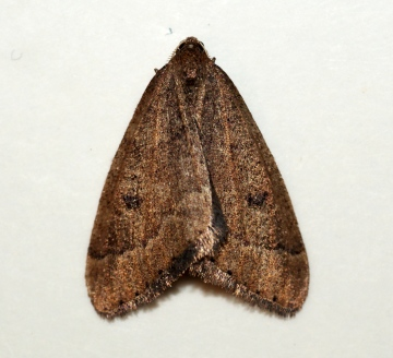 Early Moth Copyright: Ben Sale