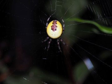 Female in web Copyright: Daniel Blyton