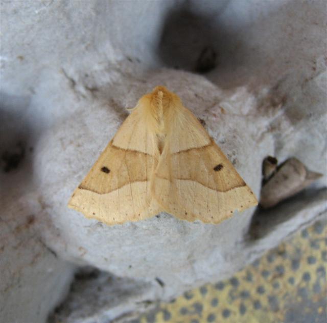 Scalloped Oak Copyright: Stephen Rolls