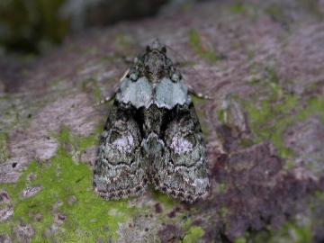 Tree-lichen beauty Copyright: Robin Barfoot