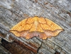 Bordered Beauty Copyright: Ben Sale