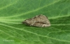 Cypress Carpet 3 Copyright: Graham Ekins