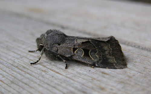 Hebrew Character 2 Copyright: Stephen Rolls