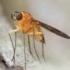 4th July 2014 female C. laetus (2) Copyright: Jeremy Richardson