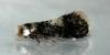 Ectoedemia heringella Copyright: Peter Furze