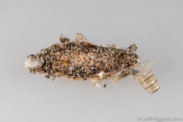 Dahlica triquetrella larval case Copyright: Jeff Higgott