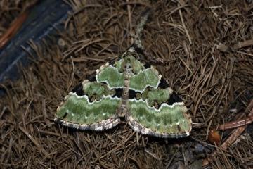 Green Carpet Copyright: Ben Sale